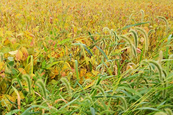 Time to consider fall weed control – Ohio Ag Net | Ohio's
