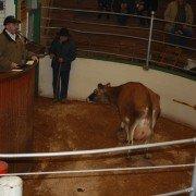 auction-block-at-kidron-auction