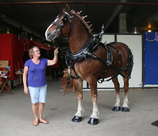 5a286419314 Draft horse shows and pulls in Ohio – Ohio Ag Net