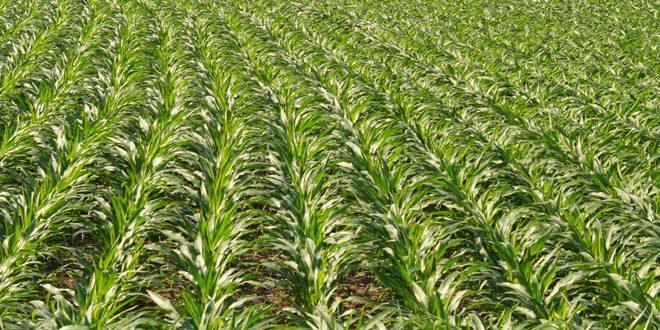 Ohio Farmland Rental Information Ohio Ag Net Ohio S