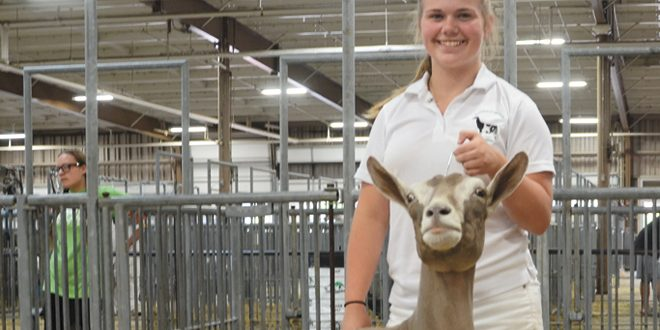 Junior Fair Dairy Goats 2018 – Ohio Ag Net | Ohio's Country Journal