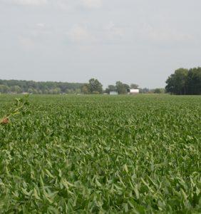 Defienace bean field