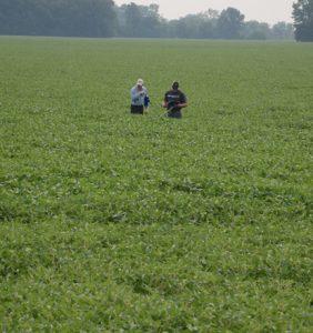 Fulton Co. bean field