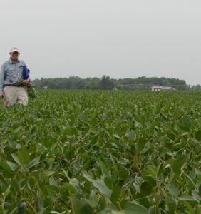 Paulding Co. bean field