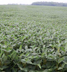 Preble Co. bean field