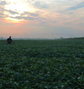 Putnam Co. soybean field