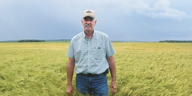 Amber waves of barley grain becoming more common in Ohio – Ohio Ag