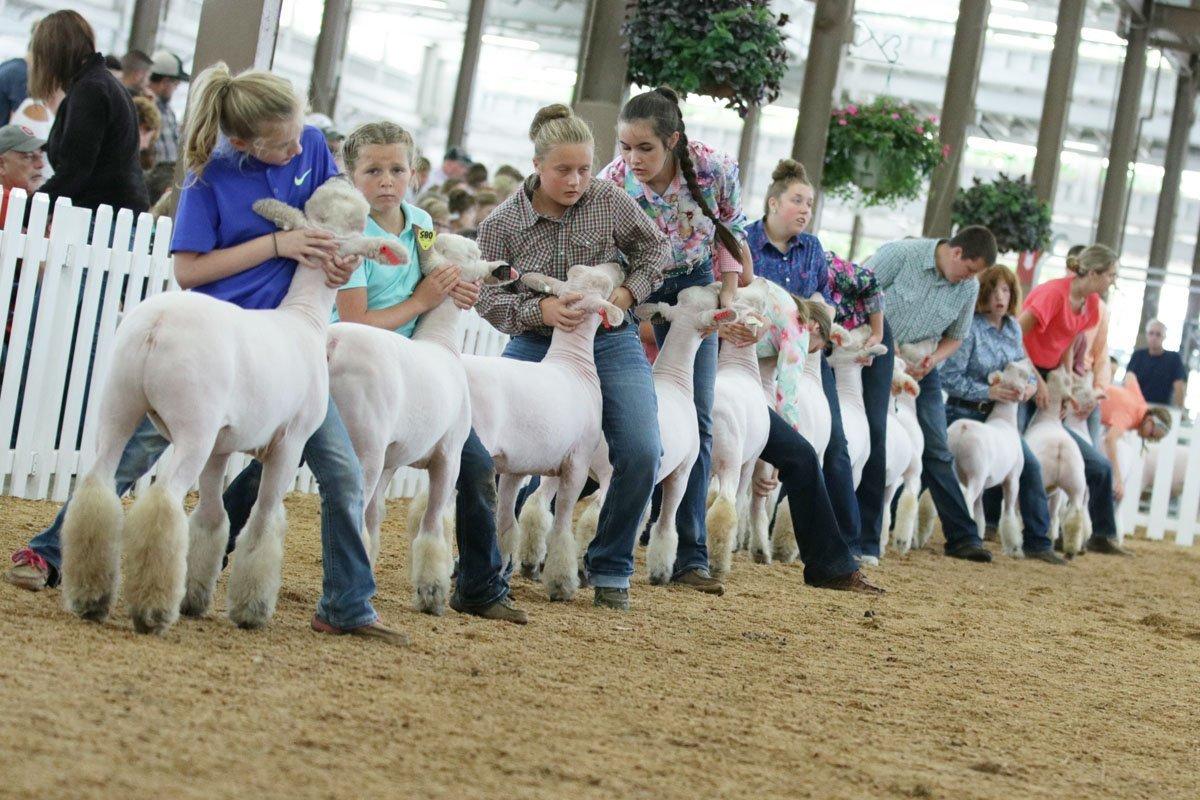 2019 Ohio State Fair Junior Market Lamb Show Results