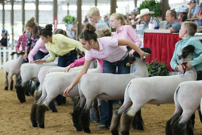 2019 Ohio State Fair Junior Market Lamb Show results – Ohio