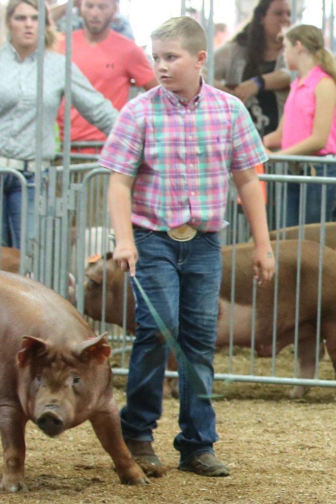 2019 Ohio State Fair Junior Market Barrow Show Results