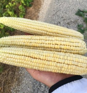 PFTour19_Day2_Stop2_IMG_3925