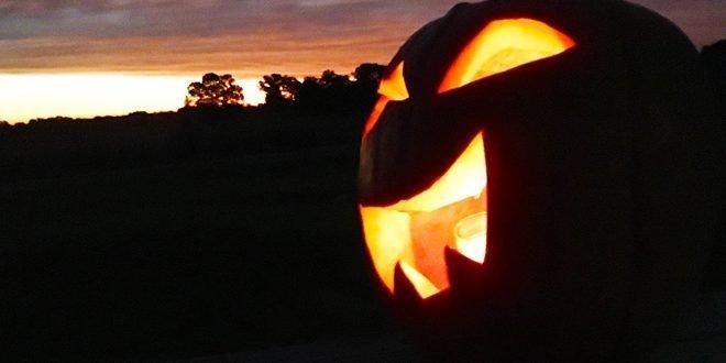 The Not So Spooky Tale Of Halloween Pumpkins Ohio Ag Net