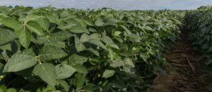 Ohio Field Leader Soybean Conservation Practices
